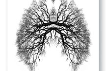 Seeds of Breathing / Conscious breathing techniques can help you shift your old character patterns, open doorways to true nature, ground you, get you into the moment, and bring your nervous system into balance.