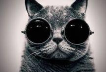 Cats &kittens / I LOVE CAT'S