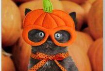 Halloween / Idee
