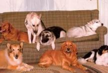 Throw Back Thursdays / Times Past with Pets