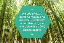 Amazing facts about Bamboo / Bamigo uses bamboo viscose in place of conventional materials because we are convinced that Bamboo is the fabric of the future.   The unique characteristics of bamboo clothing together with its durability provides an ideal and more sustainable alternative for traditional textiles.