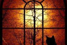 All Hallows Eve / by ANGELA