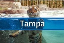 Destination Guide - Tampa, Florida / This region of Florida is one of the most easygoing and culturally diverse parts of the state, with beaches, a rich art district and amusement parks to boot. If you enjoy a mixed bag of activities for your vacation, Tampa, St. Petersburg, Dunedin, Ruskin and Clearwater can all provide you new experiences with every journey.