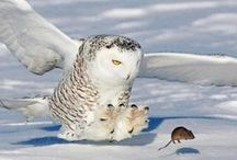 WHOOT OWLS / Owls