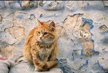 FOTO/ ANIMALS