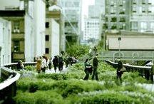 roof top / garden