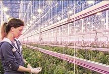 Sustainable Living / Bij Philips verbeteren we de kwaliteit van leven van mensen door tijdige introductie van zinvolle innovaties. We bestuderen trendanalyses van een groot aantal verschillende bronnen, zoals de Verenigde Naties, de Wereldbank, de World Business Council for Sustainable Development, het World Economic Forum en de Wereldgezondheidsorganisatie, maar doen ook eigen onderzoek. Hoe zorgen we samen voor een duurzamere wereld? Kijk mee, leer en geef door.