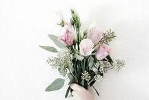 Kwiaty / Kwiaciarnia Kwiaty Jelonka Kielce Wiązanki ślubne, pogrzebowe i okolicznościowe. Kwiaty doniczkowe. Naturalne kosmetyki, upominki, prezenty.