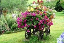 Gardening / by Laura Lynn