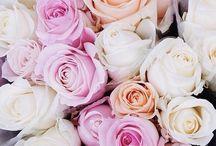 Flowers / Blommor är lika vackert som solen på himlen