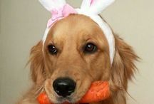 Bunny & egg time / Easter / by Tammy McCartney Largent