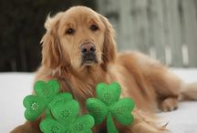 shamrocks and shenanigan's / Irish stuff / by Tammy McCartney Largent