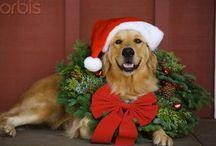 NOEL / Christmas  / by Tammy McCartney Largent