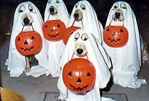 trick or treat / Halloween / by Tammy McCartney Largent