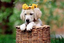 Flowers / by Tammy McCartney Largent