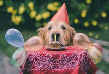 Let's have a party / by Tammy McCartney Largent