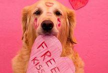 Happy Heart's day / Valentine's Day / by Tammy McCartney Largent