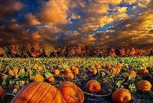 Is it Fall yet!?! / by Kayla Kipp