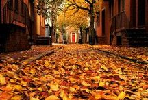 In Love with Fall / There's something magical about the colors of Fall.
