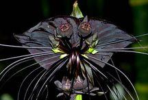 Cut flower black