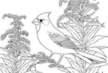 Coloring pages Birds / Birds