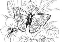 Coloring pages Butterflies / Butterflies with or without flowers