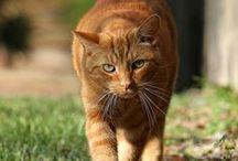 Cats / Кошек не любит только тот, кто еще не встретил свою кошку. (Дебора А. Эдварс)