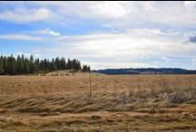 Beautiful 20 Acres With Gorgeous Views! / Beautiful 20 Acres With Gorgeous Views! Real Estate for sale by broker. Call 509.323.5555 for more information!