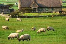 Irlanda / Tierra verde, húmeda, nebulosa, rodeada por un mar incorruptible sin playas de arena fina, con rocas impactantes. Tierra de poetas y escritores.