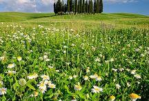 Toscana / El paisaje de mi alma.