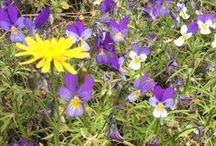 Naturaleza en Finlandia / Diferentes plantas y flores. Las cuatro estaciones en Finlandia. La fiesta de los colores.