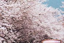 korea / Posts and photos to inspire you to travel to Korea.