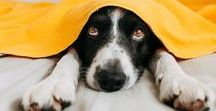 Pets in a Blanket