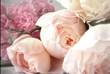 Fleurs / English Roses, Old Roses, Cabbage Roses. Vintage Peonies...