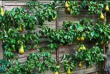 espalier and pleaching