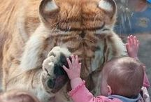 Lovable animals / Animals the best gift to mankind