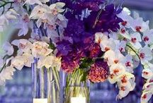 Flowers and Colors / Color schemes for the wedding and flowers for decorations or bouquets.