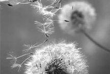 Wind ...