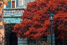 Seasons - Autumn ☂ ...