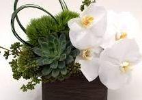 Flora / Decor