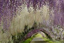 Inspiration: Floral / Inspiration