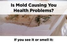 Mold & Moisture / Information and resources on mold and moisture in your home.