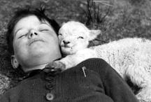 "Friend-sheep / "" I ♡ you sheep ! "" - "" Yes, I know ! ♡♡♡ "" / by birdyann"