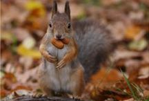 Squirrels - so cute <3