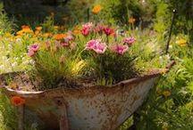 Virágok kertben, egyébben