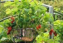 groententuin ideeen