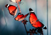 Butterfly's and moths
