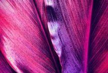 :: violet / filoet