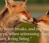 Beauty of Beast / I love nature in every form, especially animals