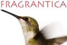 Fragrantica / Fragrances
